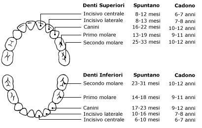 Igiene Orale Milano - I denti da latte